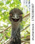 Head Of Funny Ostrich Or Camel...