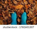 Autumn. Yellow Maple Autumn...