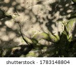 Natural Image Of Tree Roots On...