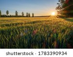 Sunrise Over Field Of Crops....