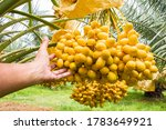 close up hands holding the date ...   Shutterstock . vector #1783649921