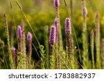 Three English Names Flowers  ...