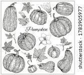 Pumpkins, butternut squash and gourd. Hand drawn vector illustration. Black and white sketch style. Autumn gourd harvest agriculture and farm isolated design elements. Farm market items.
