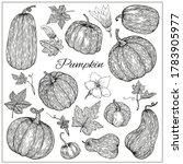 pumpkins  butternut squash and... | Shutterstock .eps vector #1783905977
