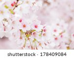 sakura in pink | Shutterstock . vector #178409084