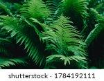 Green Fern Leaves Wallpaper....