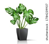 3d realistic vector house plant ... | Shutterstock .eps vector #1784239937