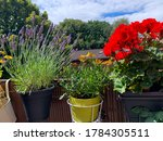 Blooming Mixed Balcony Flowers  ...