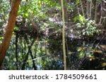 Wild Spider Orb Weaver On Its...