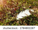 A white feather lies in the forest on the ground, with natural forest vegetation. High quality photo
