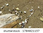 There Are Shells Mixed With...