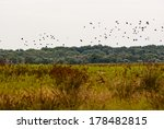 landscape with flying birds and ... | Shutterstock . vector #178482815
