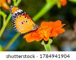 Orange Butterfly Perched On A...