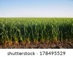 Agriculture. Edge Of The Barle...