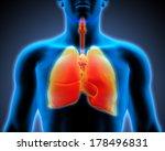 3d human anatomy   respiratory... | Shutterstock . vector #178496831