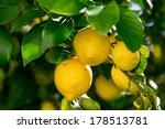 Bunch Of Vibrant Ripe Lemons O...