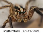 The Jumping Spider Is A Type Of ...