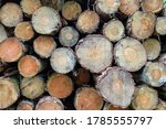 Ends Of Cut Timber In A Log Pile