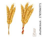 3d vector realistic wheat set ... | Shutterstock .eps vector #1785586571