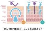 vector of cross section...   Shutterstock .eps vector #1785606587