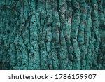Turquoise Background. Bark Of...