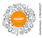 walnut nuts hand drawn sketch.... | Shutterstock .eps vector #1786160327