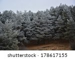 pine trees covered with a light ... | Shutterstock . vector #178617155