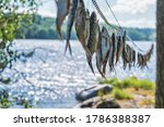 Dried River Fish Hanging In The ...