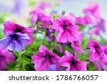 Basket Of Vibrant Pink  Purple...