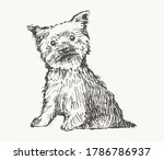 Yorkshire Terrier. Hand Drawn...