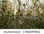 daisy bellis perennis on a... | Shutterstock . vector #1786859861