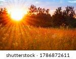 Orange Sunset In A Wild Field ...