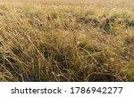 a barren desolate field with... | Shutterstock . vector #1786942277