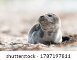 Seal On The Beach On The Baltic ...