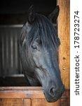 Head Shot Of A Black Horse...