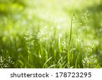 summer flowering grass and... | Shutterstock . vector #178723295