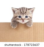 Stock photo kitten in cardboard box 178723637