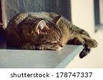 Stock photo cute cat resting 178747337
