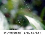 Close Up Macro Of A Spider In ...