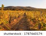Autumn Sunset In The Vineyards...