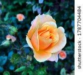 macro photo nature plant flower ... | Shutterstock . vector #1787704484