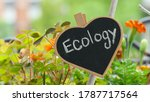 Ecology  A Chalkboard With...
