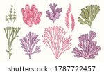 corals and seaweed. vector hand ... | Shutterstock .eps vector #1787722457