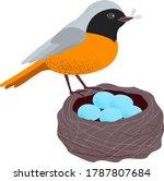 Redstart Is A Eurasian And...