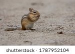 A Small Chipmunk With Hand Ove...