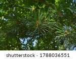 The Green Spiky Leaves Of The...