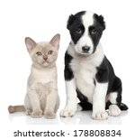 Stock photo kitten and puppy together posing on a white background 178808834