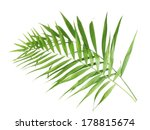 beautiful palm leaves isolated... | Shutterstock . vector #178815674