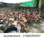 A Group Of Ducks In A Cage