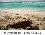 Tropical Beach. Closeup View O...